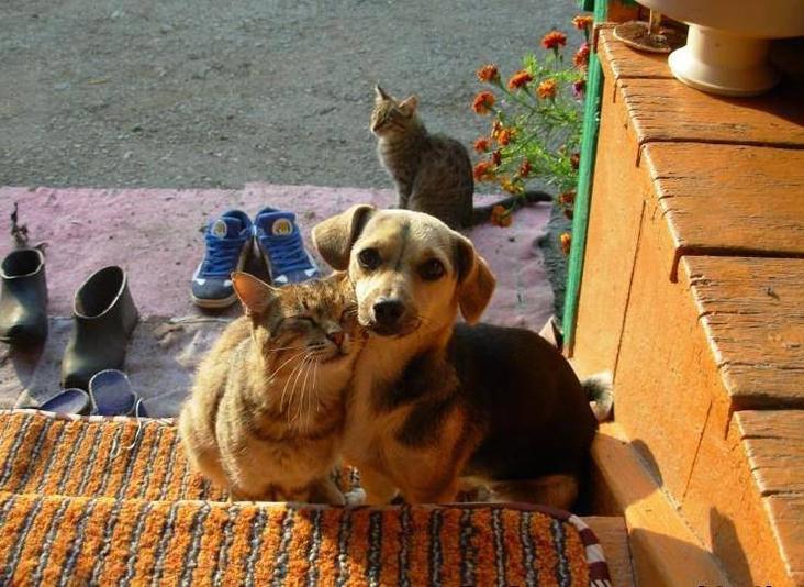 Супер смешные картинки с животными с надписями