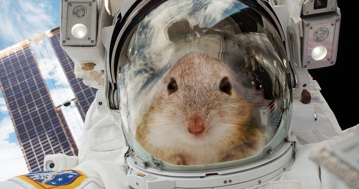 20 Mice Are Going to Space To Help Us Figure out How to Survive on Mars