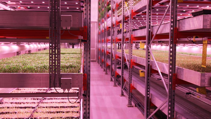 Seeking funding for Hydroponic cultivation